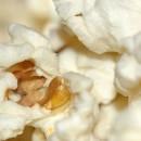 DSC_3234-940-close-up-photo-popcorn-130x1301