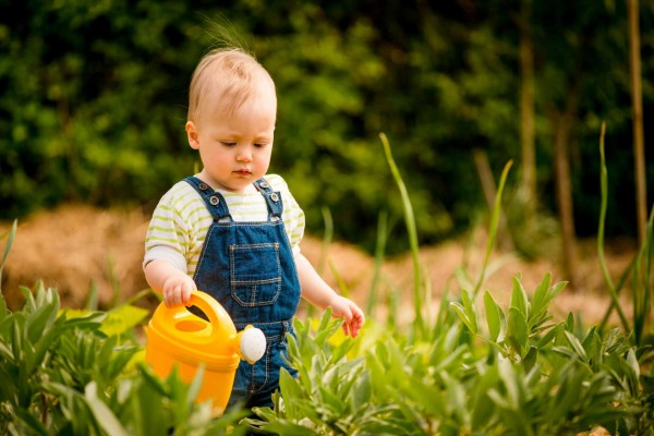 bigstock-Growing-plants-baby-with-wat-64928623ssss-600x400
